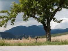 Strom...Autor: Vladimír Macko
